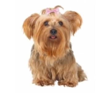 Trixie Заколка-бантик для собак с металлической застежкой