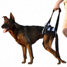 """Frakishtak Поддержка задняя """"трусами"""" для собак"""