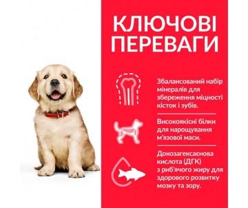 Hills Dog Science Plan Puppy Large Breed Chicken