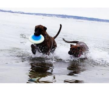 Planet Dog Zoom Flyer Игрушка для собак Летающая тарелка