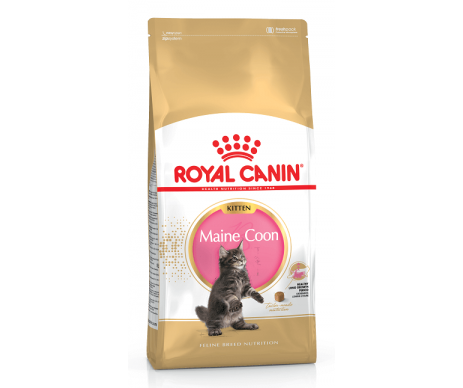 Royal Canin Cat MAINECOON KITTEN