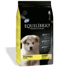 Equilibrio Dog Puppies All Breeds Active